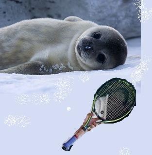 290px-Bébé_Phoque_de_Weddell_-_Baby_Weddell_Seal