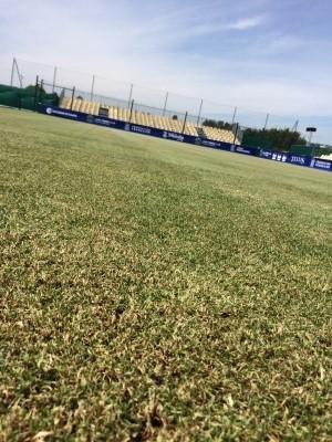 L'herbe du central